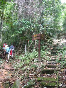 Borneo, Sarawak, rafflesia, lundu, largest flower, mountain, nature, national park, tallest flower, amorphophallus hewittii