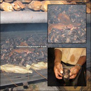 Borneo, Kalimantan barat, siding, patie cave, rock climbing, bird nest, swiflet, adventure, mountain, dayak, land, bidayuh, jungle, tuak, local, exotic delicacy,  transborder, kampung padang pan, gumbang