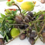 borneo, kalimantan, indonesia, sarawak, malaysia, longan, local fruits, wild, exotic, matoaan, indonesia, sarawak, malaysia, longan, local fruits, wild, exotic
