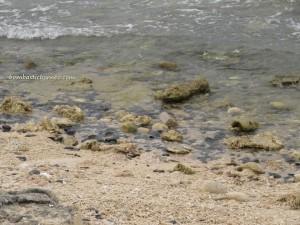 Pulau/island Randayan, Pantai, singkawang, bengkayang, kalimantan barat, indonesia, beach, borneo, Sungai Raya, Pulau Lemukutan, Pulau Penata Besar, Pulau Kabong, Corals