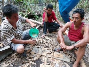 alcoholic, Arenga Pinnata, Bau, cider, exotic fruit, indigenous, Kampung Gumbang, Kuching, malaysia, native, nature, orang asal asli, outdoors, tribal, tribe, village, Dayak, tuak, nyok,