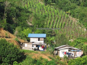 bamboo bridge, Bengoh, Bidayuh kampung, Bungo Range, Bengoh dam, Gawai Sawa, indigenous dayak, Kuching, malaysia, Mount Jogong, native, outdoor, Padawan, paddy harvest festival, traditional, trekking, tribal, tribe,