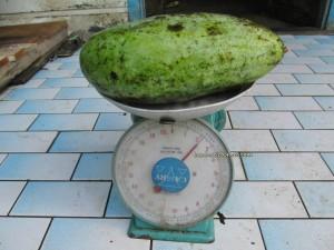 Betong, Durian Isu, Durian Pakan, mangoes, nature, rambutan, traditional, wild durian, local olive, Dabai,
