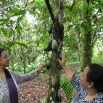 authentic, Bidayuh, Borneo Heights, dayak, Ethnic, homestay, indigenous, Kampung, longhouse, native, nature, outdoors, Padawan, traditional, chocolate, koko, village,
