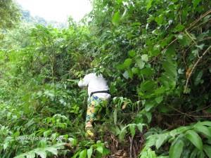 Borneo, exotic delicacy, exotic fruit, hiking, jungle, nature, Nutritious, outdoors, Pasir Pandak, pasir panjang, rainforest, Santubong, Sungai Buah, Tourism, tourist attraction, trekking, Wild durian hybrid,