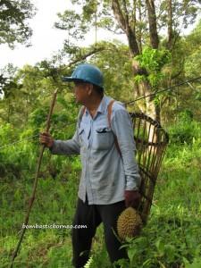 exotic delicacy, exotic fruit, hiking, Kuching, malaysia, nature, Nutritious, outdoors, Pasir Pandak, pasir panjang, Mount Santubong, Sarawak, Tourism, tourist attraction, trekking, Wild durian hybrid,