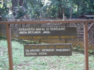 useful information, adventure, Asian Pit Viper, Bornean bearded pig, jungle, macaque, mangrove forest, nature, outdoors, proboscis monkey, rainforest, Taman Negara Bako, Teluk Assam Beach, Tourism, tourist attraction, travel guide, trekking, wildlife,
