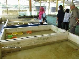 Indigenous fisheries, development, freshwater, Innovation, Invention, research center, Serian, Tarat Agriculture Station, UITM, Universiti Teknologi MARA, 忘不了鱼