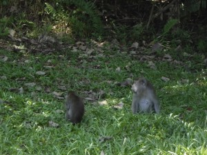 adventure, Bornean bearded pig, hiking, jungle, Kuching, malaysia, mangrove forest, nature, outdoors, proboscis monkey, rainforest, Sarawak, Taman Negara Bako, Teluk Assam Beach, Tourism, tourist attraction, travel guide, trekking,