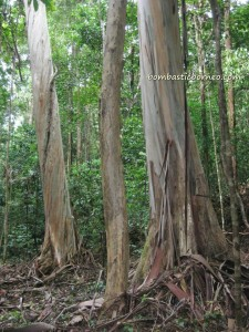 adventure, air terjun, gully, Gunung Santubong, hiking, jungle, Kuching, nature, outdoors, rainforest, Tourism, tourist attraction, travel guide, trekking, Waterfall, Puteri