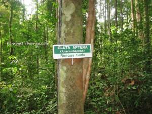 adventure, air terjun, gully, Gunung Santubong, hiking, jungle, Kuching, nature, outdoors, rainforest, Tourism, tourist attraction, travel guide, trekking, Waterfall, Mountain,