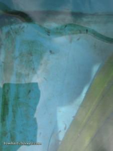 Design, development, empurau, fish breeder, fish farming, fresh water fish, IDEAS, Innovation, Invention, Serian, UITM, Universiti Teknologi MARA, 忘不了鱼