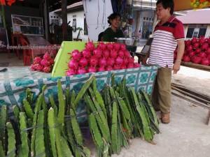 authentic, Dragon fruits, Ethnic, Exotic Fruits, indigenous, kalimantan timur, Kaltim, native, Obyek wisata, Samarinda Backpackers, 火龙果, Sepinggan Airport