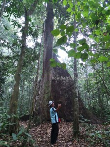 adventure, Borneo, east kalimantan, ecowisata, hiking, nature, Obyek wisata, orang utan, outdoors, prevab, primary jungle, rainforest, taman nasional kutai, tourist attraction, trekking, wild plant, wildlife,