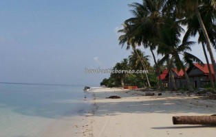 Berau, Borneo, Derawan Archipelago, dive center, diving spot, green sea turtle, homestay, Paradise Island Resort, marine life, nature, Obyek wisata, outdoors, pasir putih, Pulau, tourism, travel guide, sunset, village