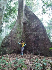adventure, Borneo, east kalimantan timur, ecotourism, ecowisata, hiking, Kutai National park, nature, outdoors, prevab, primary jungle, rainforest, Sangatta, tourist attraction, trekking, wild plant, wildlife