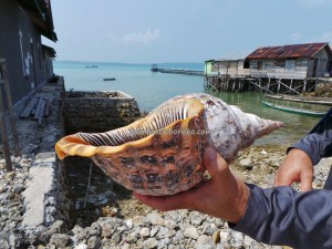 adventure, authentic, indigenous Bajau, Berau, Borneo, dive center, fishing village, hidden paradise, Kampung Teluk Alulu, nature, Obyek wisata, outdoors, Pulau, Suku Bajo, Tourism, tourist attraction, travel guide