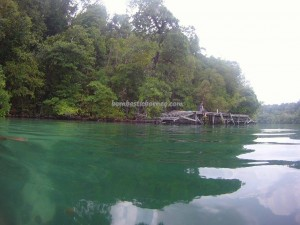 adventure, Berau, brackish lake, Derawan Archipelago, diving spot, East Kalimantan Timur, marine life, nature Reserve, Obyek wisata, outdoors, snorkeling, stingless jellyfish, Tourism, tourist attraction, travel guide, Tripedalia cystophora, underwater, World Heritage