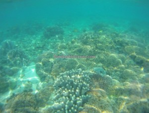 adventure, Bajau Fishing village, Berau, Borneo, Celebes Sea, coral, Derawan Archipelago, East Kalimantan Timur, marine life, nature, Obyek wisata, pasir putih, Suku Bajo, Tourism, tourist attraction, travel guide, underwater, white sandy beaches