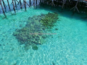 adventure, Bajau Fishing village, Berau, Celebes Sea, coral, Derawan Archipelago, Dive Lodge Resort, Island, diving, East Kalimantan Timur, hidden paradise, Obyek wisata, outdoors, snorkeling, Tourism, tourist attraction, travel guide, vacation,