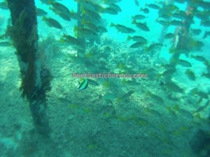adventure, Berau, Celebes Sea, coral, Derawan Archipelago, Dive Lodge Resort, Pulau, diving, nature, hidden paradise, Wisata alam laut, outdoors, snorkeling, Tourism, tourist attraction, travel guide, vacation, Borneo