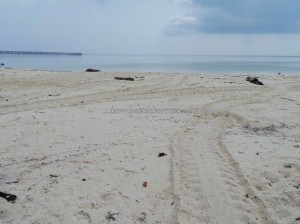 adventure, beach, Berau, Derawan Archipelago, diving spot, east kalimantan timur, indonesia, Manta ray, marine life, Obyek wisata, outdoors, Pulau Sangalaki, Dive Lodge Resort, snorkeling, Tourism, tourist attraction, travel guide, nature