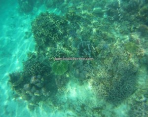 adventure, Borneo, Celebes Sea, coral, Derawan Archipelago, Dive Lodge Resort, island, diving, East Kalimantan Timur, hidden paradise, marine life, nature, outdoors, Tourism, tourist attraction, travel guide, underwater, vacation,