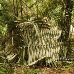 adventure, nature, air terjun, Tanju waterfall, bamboo bridge, Highlands, dayak bidayuh, native, rainforest, Kampung Kiding, village, Kuching, Padawan, tour guide, Travel, tribal, tribe,