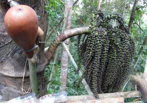 adventure, Highlands, dayak bidayuh, native, Ethnic, ijok, ijuk, nyok, jungle trekking, rainforest, Kampung Kiding, Kuching, malaysia, padawan, outdoors, tourist attraction, traditional, village