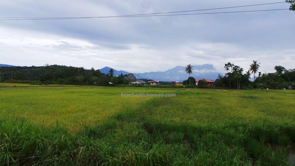 Kota Belud Malaysia  city photos : Rungus, adventure, authentic, Orang Asal, Village, Kampung, Kudat ...