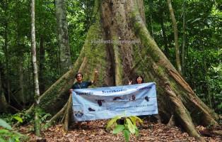 Tawau Hills Park, backpackers, Borneo, Malaysia, destination, Adventure, nature, Trekking, ecotourism, travel guide, Seraya Kuning Siput, Shorea Faguetiana, yellow meranti, 世界最高的热带树, 婆罗洲, 沙巴马来西亚旅游景点