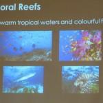 beach, underwater, biodiversity, ecosystems, fisheries, importance, Borneo, marine life, 沙捞越