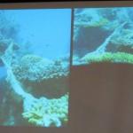 beach, biodiversity, educational talk, fisheries, importance, Kuching, malaysia, Borneo, 沙捞越