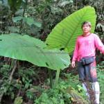 adventure, outdoor, trekking, hiking, rainforest, jungle, waterfall, Highlands, Kampung Sadir, village, Kuching, Padawan, Tourism, travel guide, 沙捞越瀑布