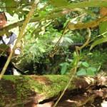 outdoor, nature, hiking, rainforest, air terjun, Ban Buan Kukuot waterfall, backpackers, Highlands, native, Kampung Sadir, village, Kuching, Padawan, Tourism, tourist attraction, 沙捞越瀑布
