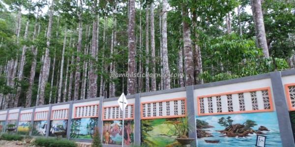 Borneo, Kalsel, South Kalimantan, Island, Sebelimbingan village, white meranti trees, Shorea bracteolate, conservation, ecotourism, nature, Tourism, tourist attraction, travel guide, 南加里曼丹, 婆罗州