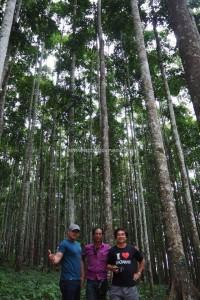 Kalimantan Selatan, Kalsel, Sebelimbingan village, white meranti trees, Hutan Wisata Meranti, Shorea bracteolate, conservation, ecotourism, ecowisata, nature, outdoors, tourist attraction, travel guide, 南加里曼丹, 婆罗州