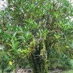 Gambang, Recreational, adventure, outdoors, activities, training, family vacation, fruit orchard, chalets, accommodation, tourism, tourist attraction, travel guide, Useful information