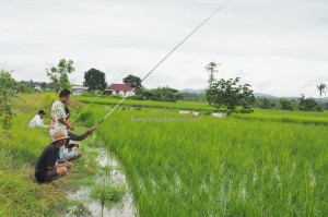 Fishing, authentic, Indigenous, ethnic, Banjarese, native, Borneo, Indonesia, paddy field, sawah padi, Tourism, tourist attraction, travel guide, 南加里曼丹, 婆罗州稻田