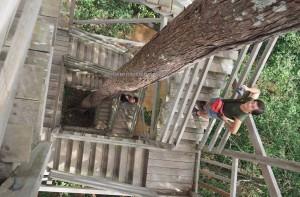 Bukit Bangkirai National Park, Borneo, East Kalimantan, Kutai Kartanegara, Samboja, Jembatan gantung, backpackers, hutan konservasi, rainforest, Nature Reserve, outdoors, objek wisata alam, Tourism, 东加里曼丹, 婆罗州吊桥