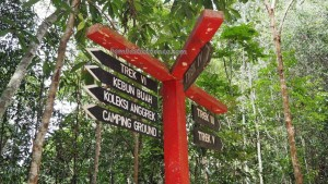 National Park, Indonesia, East Kalimantan, Kutai Kartanegara, Samboja, backpackers, destination, hutan konservasi, primary jungle, outdoors, ecotourism, objek wisata alam, tourist attraction, travel guide, 东加里曼丹婆罗州