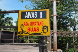 outdoors, backpackers, Borneo, conservation, river, primary jungle, mangrove forest, Nature Reserve, proboscis monkey, wildlife, tourism, tourist attraction, objek wisata, Kota Balikpapan, travel guide,