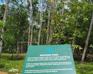 outdoors, backpackers, Borneo, Indonesia, belian park, botanic garden, conservation, Hutan Lindung Sungai Wain, Nature Reserve, Pusat Konservasi, ecotourism, travel guide, alam, Obyek wisata,