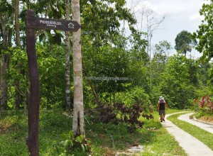 Kalimantan Timur, outdoors, backpackers, Borneo, belian park, botanic garden, conservation, Hutan Lindung Sungai Wain, Nature Reserve, Pusat Konservasi, tourism, travel guide, alam,