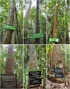 National Park, Hills, Kota Balikpapan, Borneo, Kalimantan Timur, Kutai Kartanegara, conservation, destination, primary jungle, rainforest, Nature Reserve, outdoors, ecotourism, tourist attraction, travel guide,