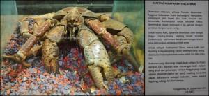 crab, Museum Kayu Tuah Himba, destination, koleksi, collection, Borneo, East Kalimantan, Kutai Kartanegara, Panji Sukarame, nature, Tourism, tourist attraction, travel guide, 东加里曼丹, 博物馆,
