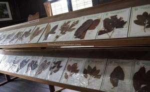 Herbal, Wood Museum Tuah Himba, destination, collection, Borneo, Indonesia, Kutai Kartanegara, Panji Sukarame, nature, Tourism, tourist attraction, travel guide, 东加里曼丹, 婆罗州, 旅游景点