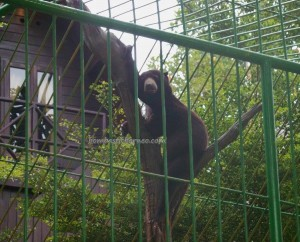 Ladang Budaya, sun bear, backpackers, destination, Kutai Kartanegara, Mangkurawang, Borneo, Indonesia, family vacation, wildlife, mini zoo, tourism, travel guide, 东加里曼丹, 旅游景点