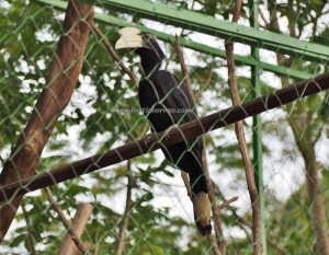 Ladang Budaya, backpackers, destination, East Kalimantan, Kota Tenggarong, Kutai Kartanegara, family vacation, hornbill, mini zoo, wildlife, objek wisata alam, Tourism, travel guide, 婆罗州, 旅游景点