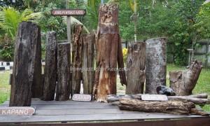 Museum Kayu Tuah Himba, koleksi, collection, Borneo, Indonesia, Kota Tenggarong, Kutai Kartanegara, Panji Sukarame, nature, Obyek wisata, Tourism, travel guide, 东加里曼丹, 婆罗州, 博物馆,